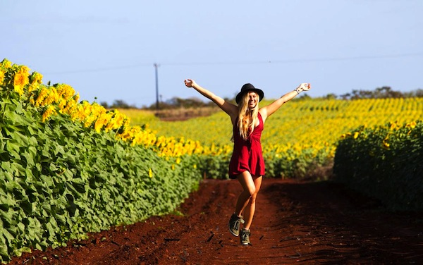 coco ho sunflowers