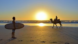 Camels surfers taghazout